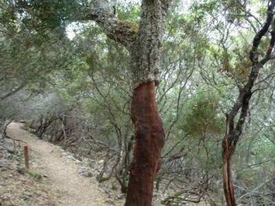 Parque Nacional Monfragüe - Reserva Natural Garganta de los Infiernos-Jerte;excursiones y senderism